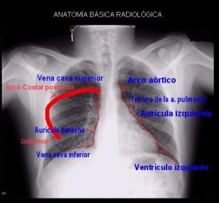 anatomía - Lic. Alejandra Patricia Cork